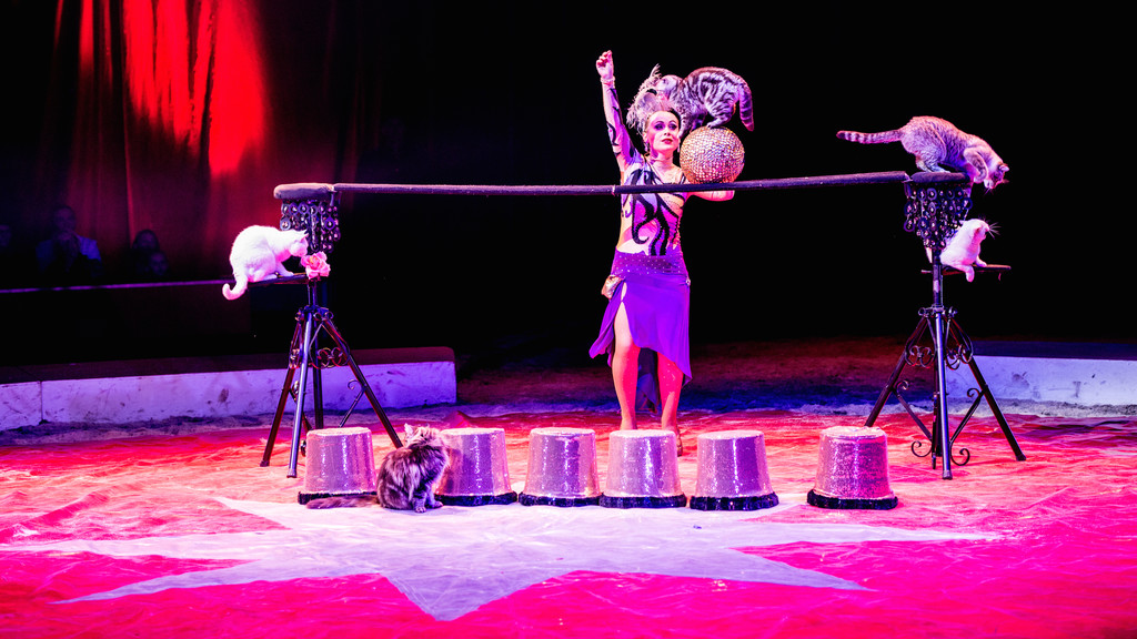 Festival International du Cirque 2015 - Numéro Anelya - Chats