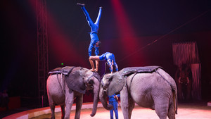 Festival International du Cirque 2015 - Etoile d'or Famille Casselly & éléphants